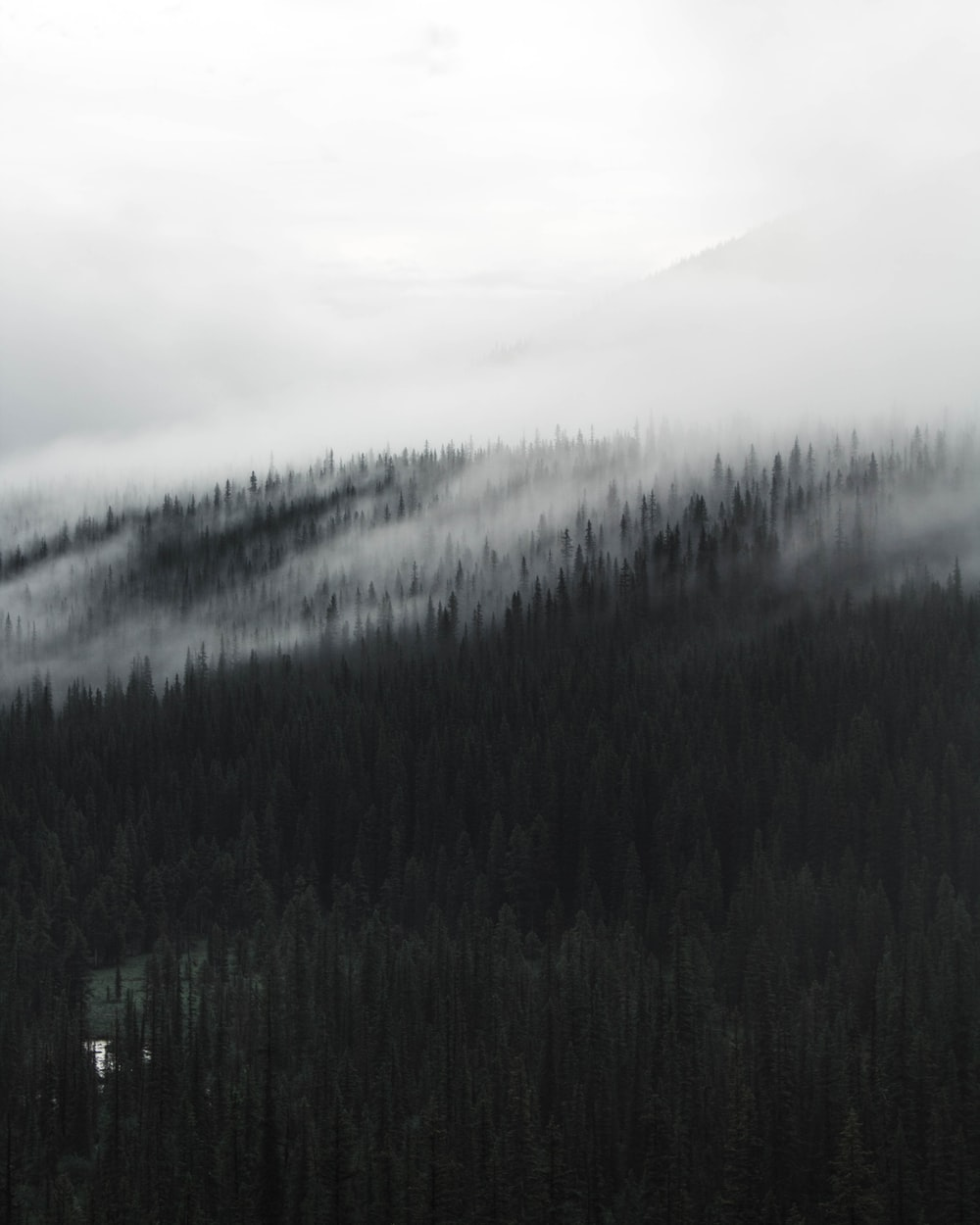 grayscale photography of forest covered with fogs