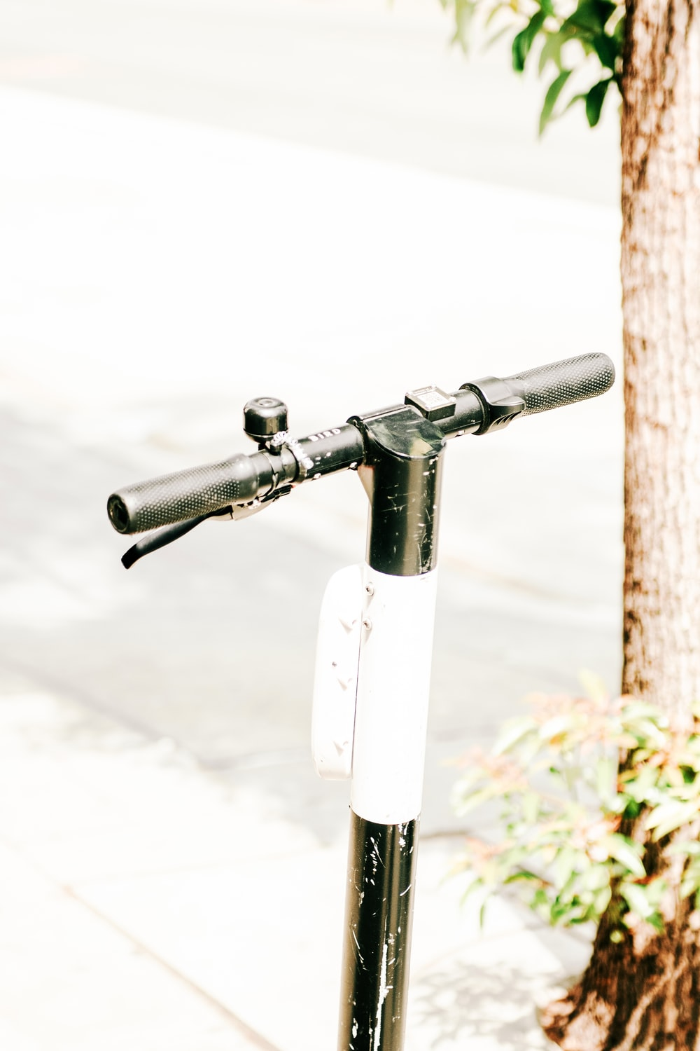 black and white kick scooter handle besides brown tree
