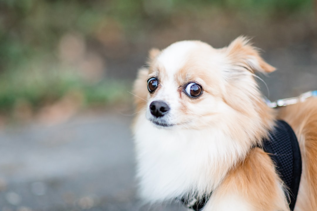 Small skeptical dog