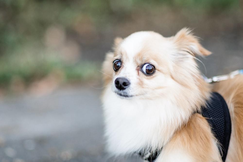 brown and white medium-coated dog