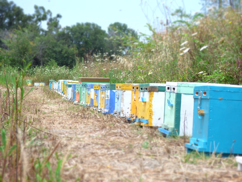bee hive box lot close-up photography