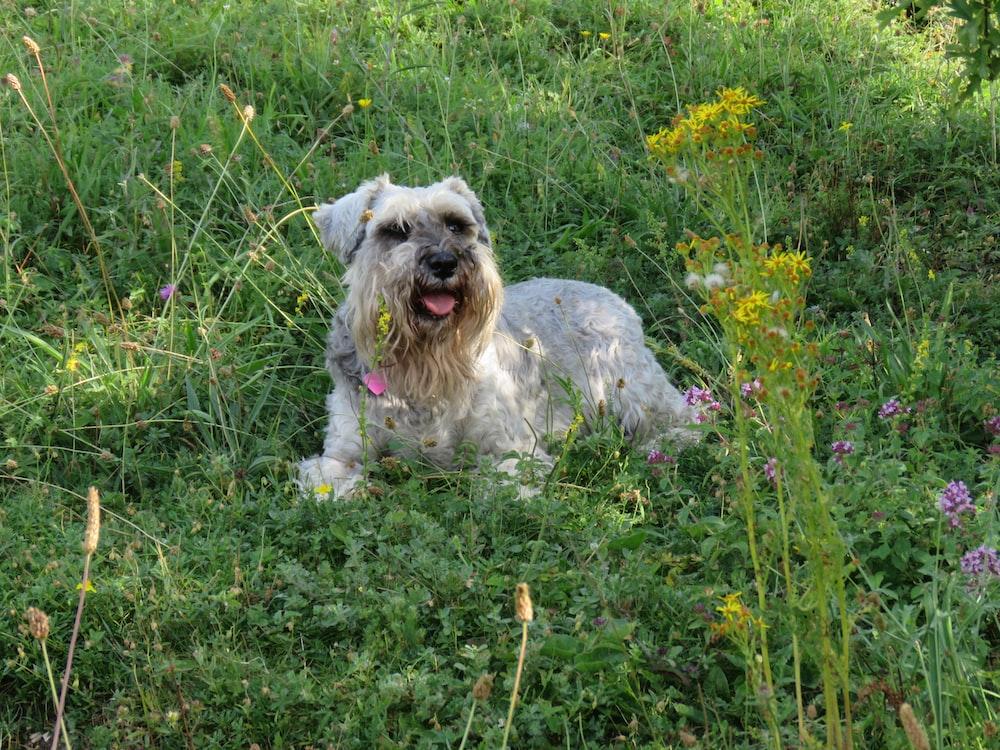 white dog lying on plants