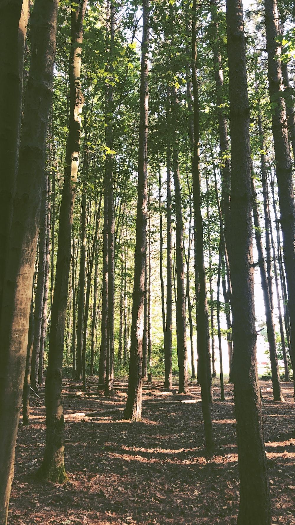 brown tree lot during daytime