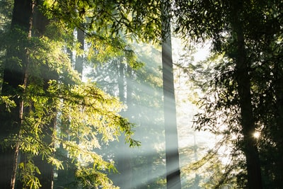 Trees with sun flare