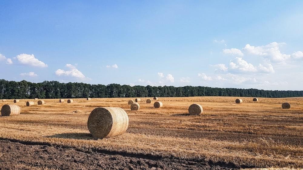 hays on field