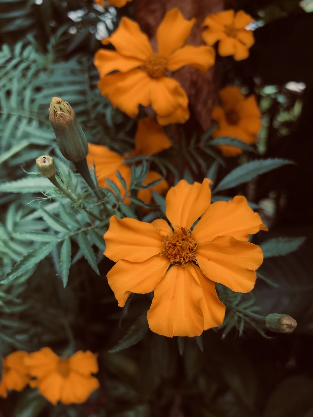 orange-petaled flowers with leaves