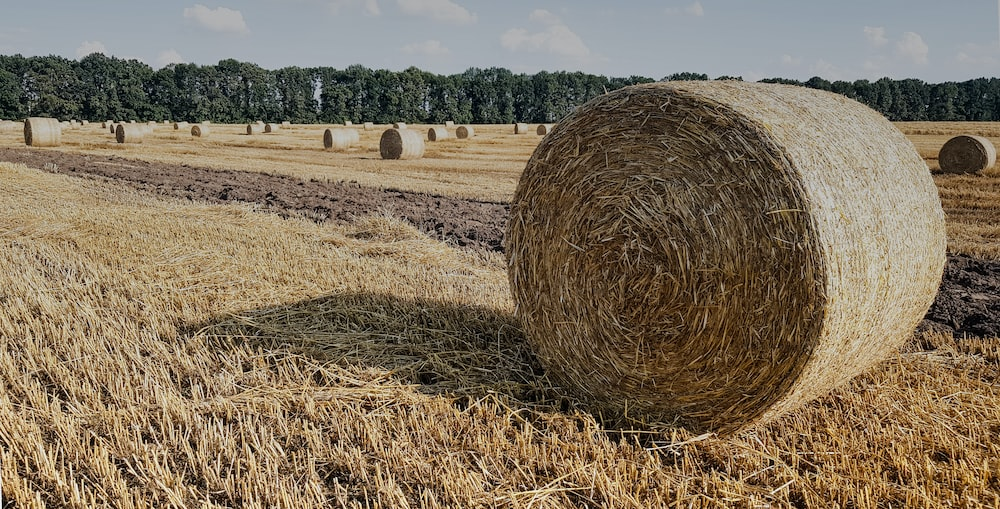 round hay bale lot in field