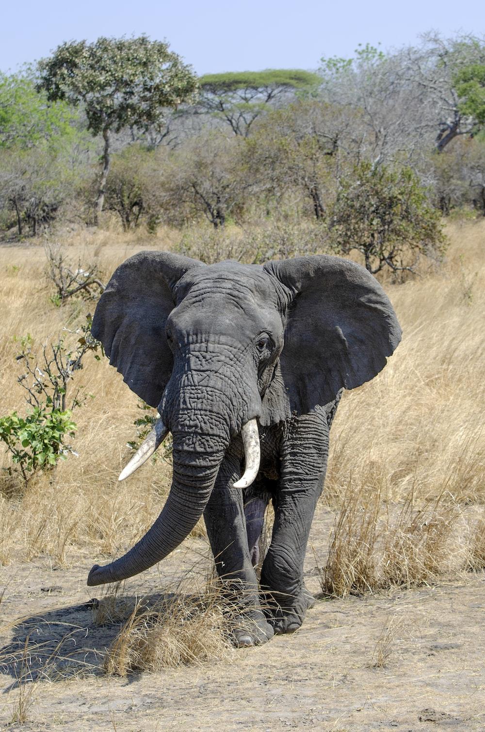 grey elephant cub