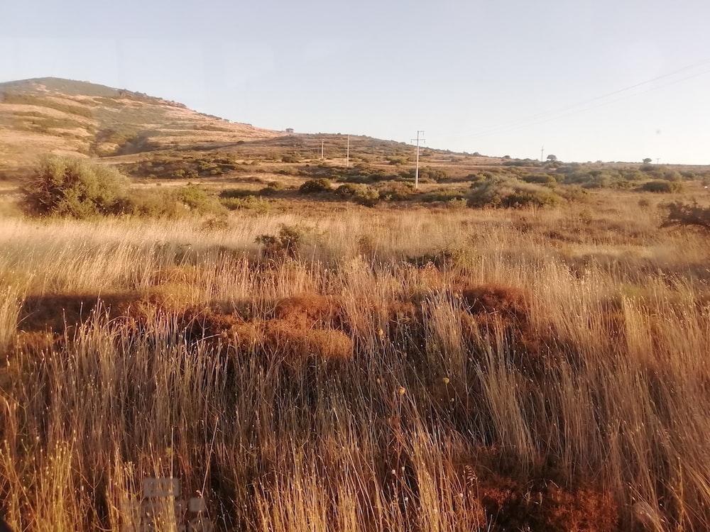 brown grassland across white power towers