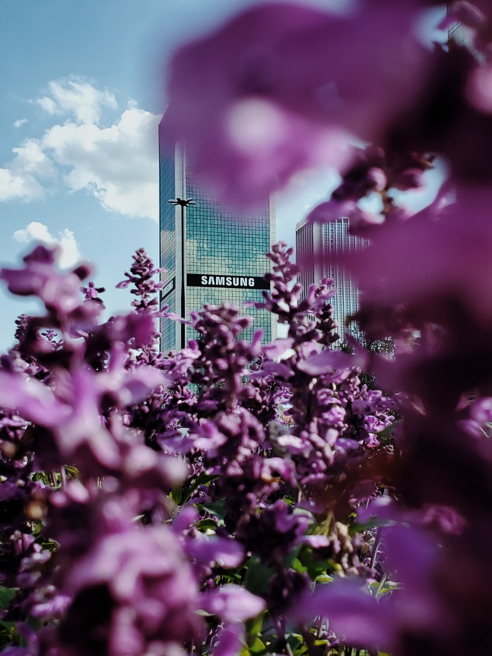 Samsung building through pink-petaled flowers