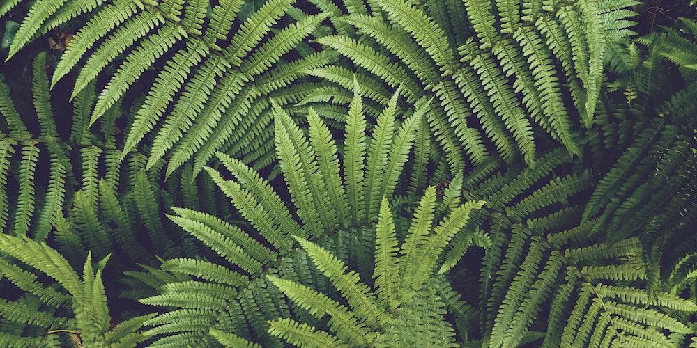 green-leafed palm