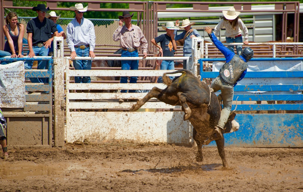 man wearing black vest riding bull besides blue and white metal fence