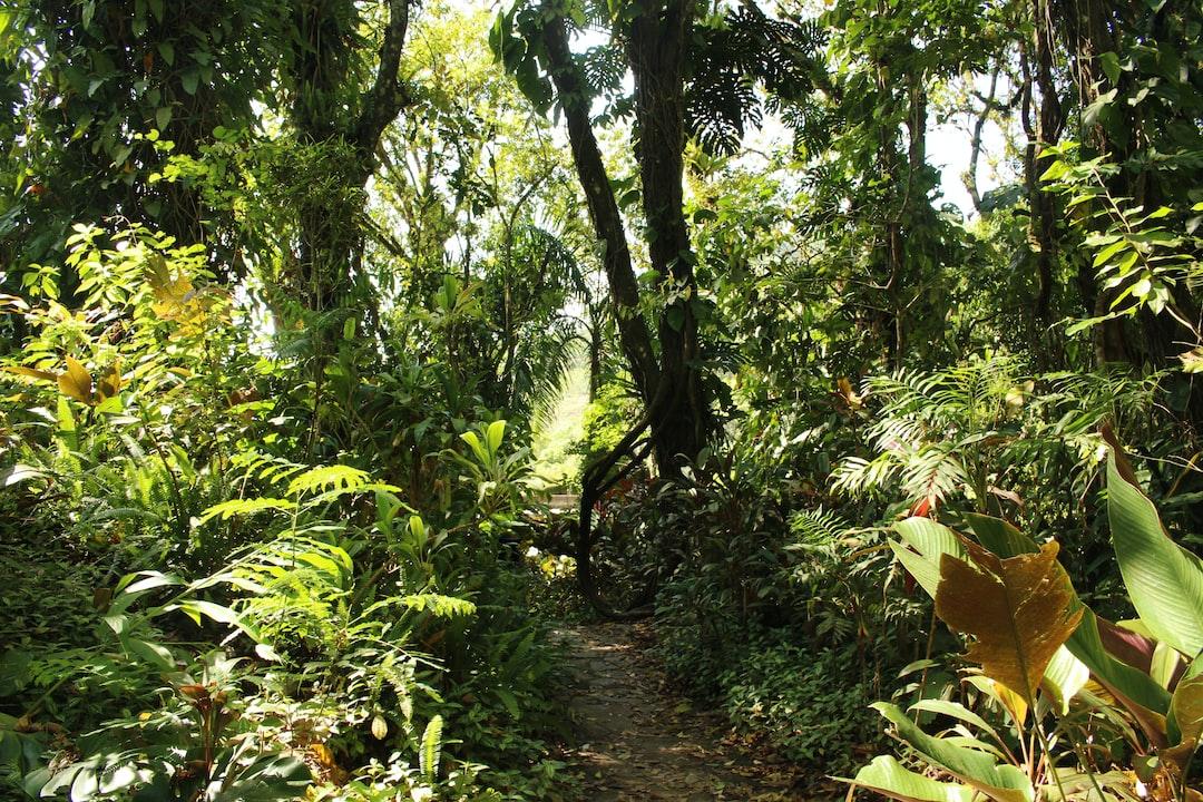 Selva en Xilitla, San Luis Potosí, México