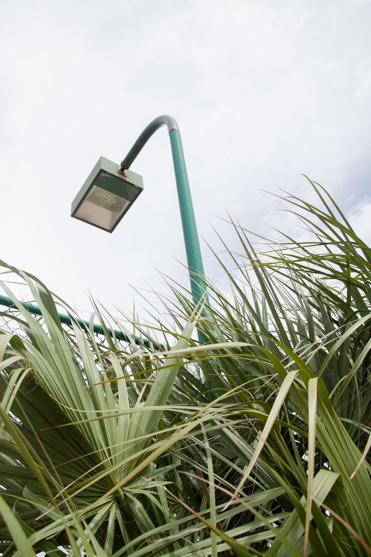 green palm plants besides green lamp pole