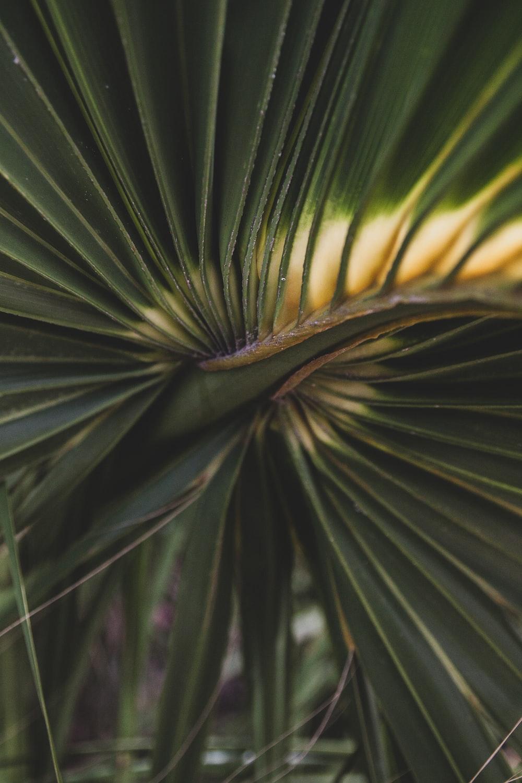 green palm plant macro photography
