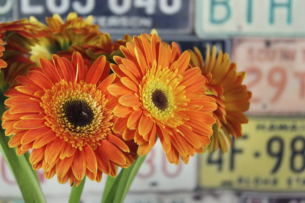 orange-petaled flowers