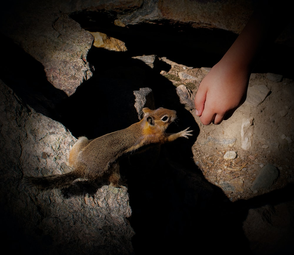 brown squirrel reaching out person's hand