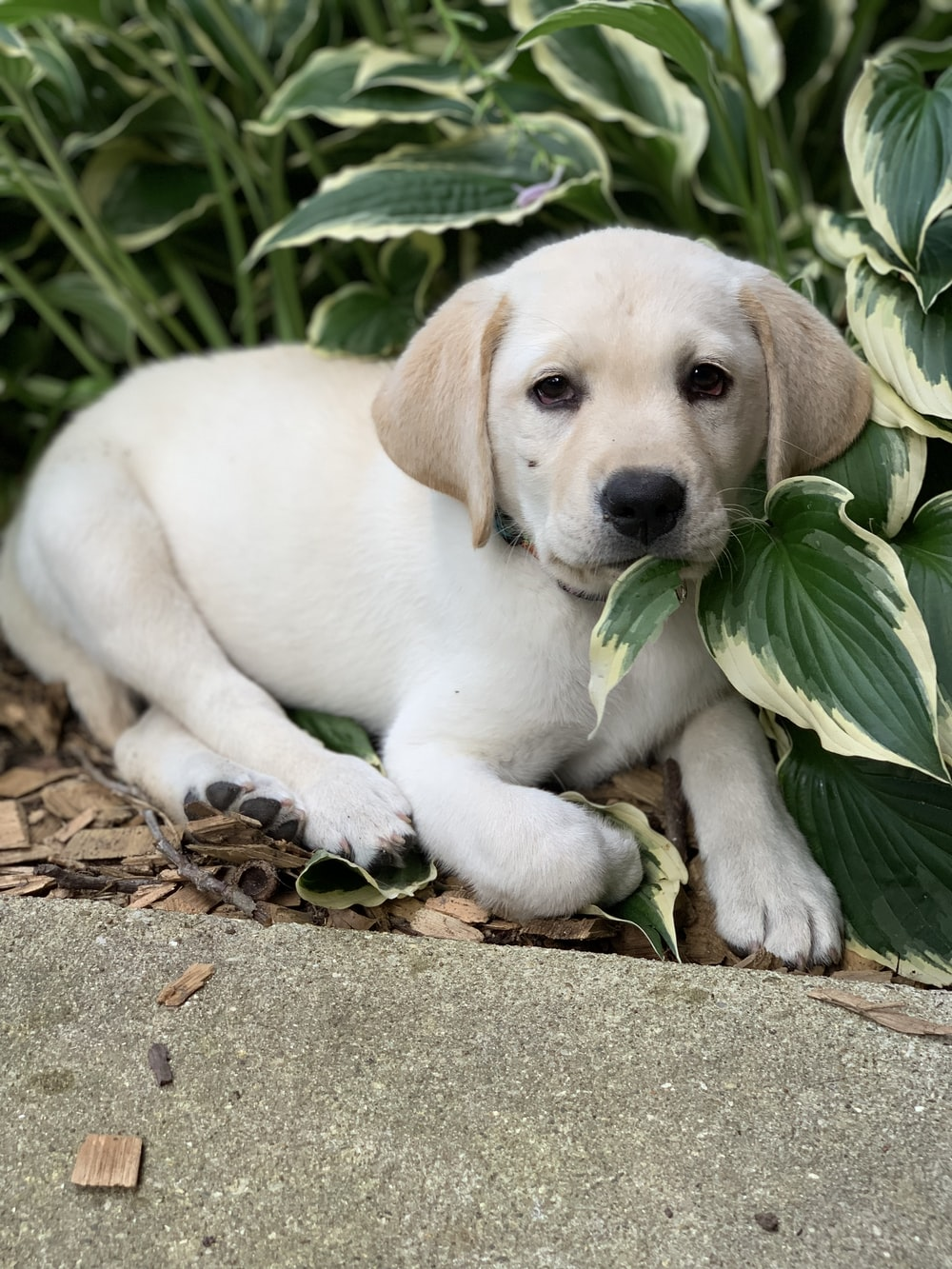 beige and white puppy near plant