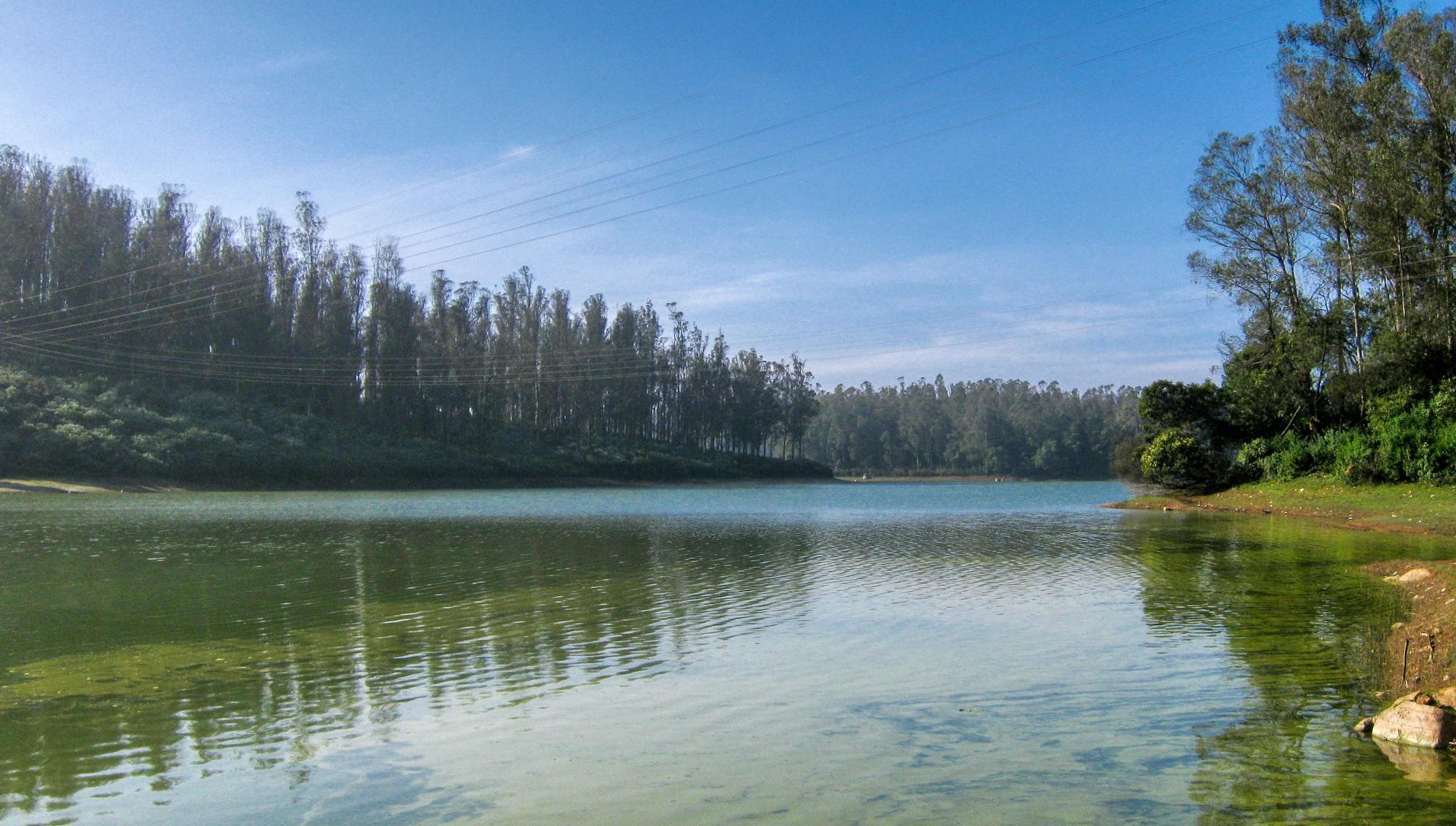 Serene land near the pine forest.