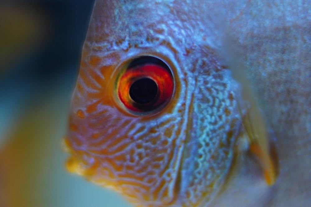 closeup photo of orange and white fish