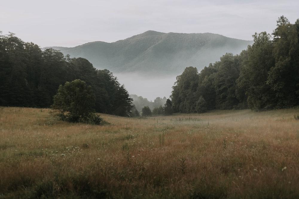 brown field near trees