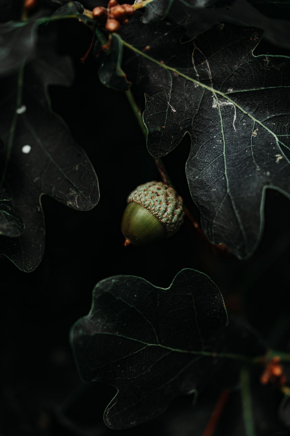 green nut near leafs close-up photography