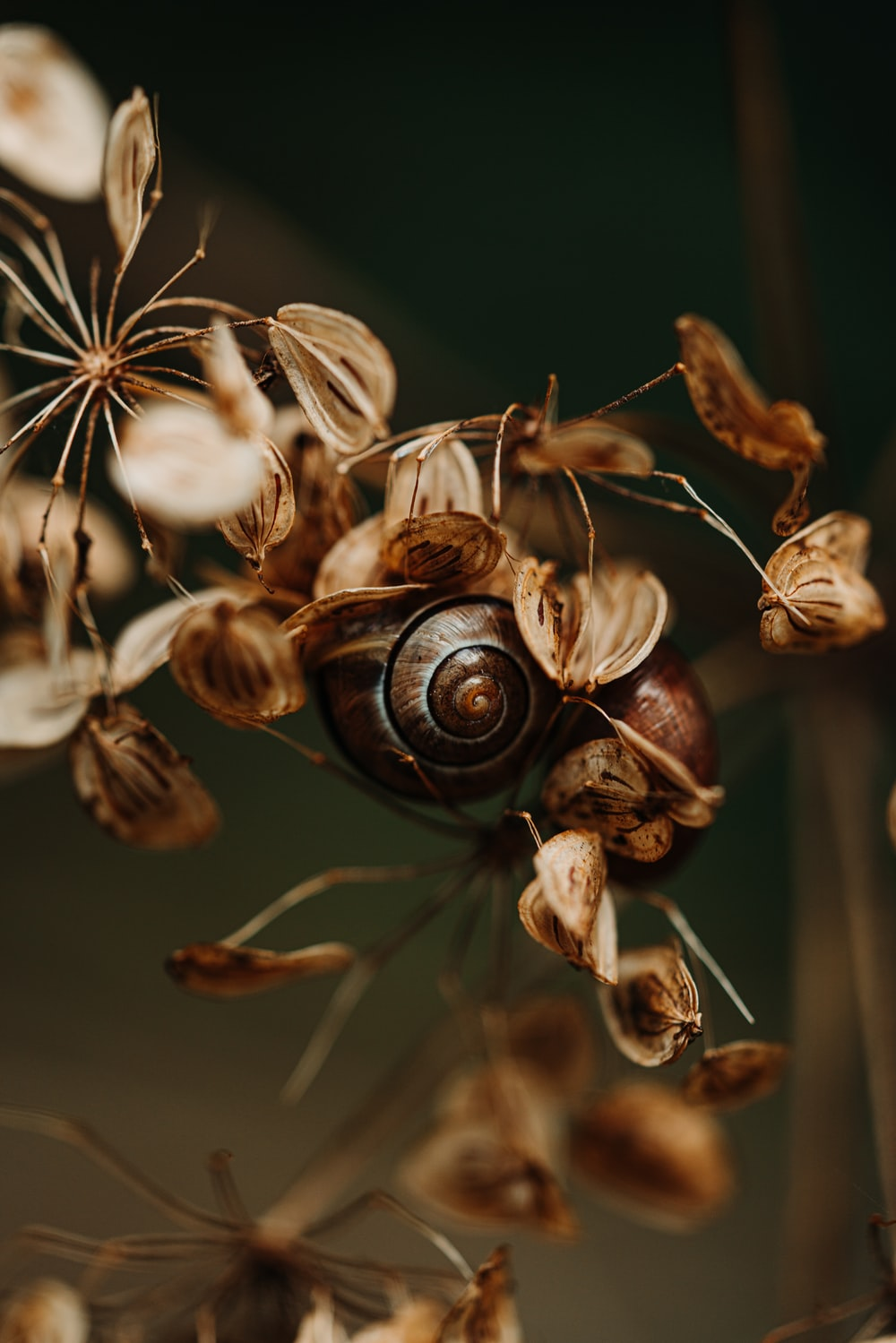 brown snails macro photography