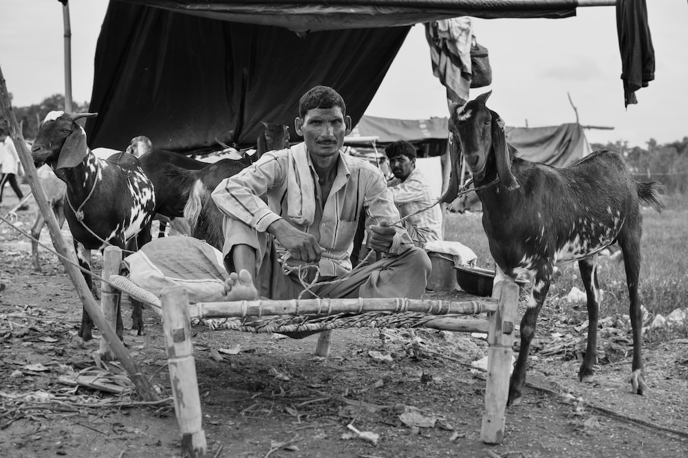 grayscale photo of man sitting on bed frame beside goats