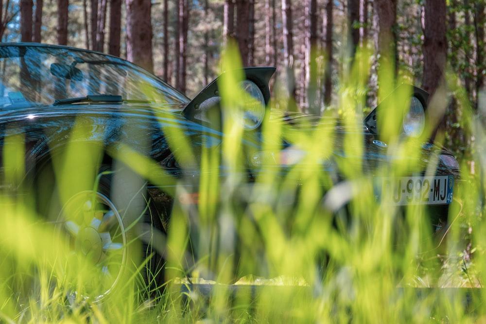 black car near tree