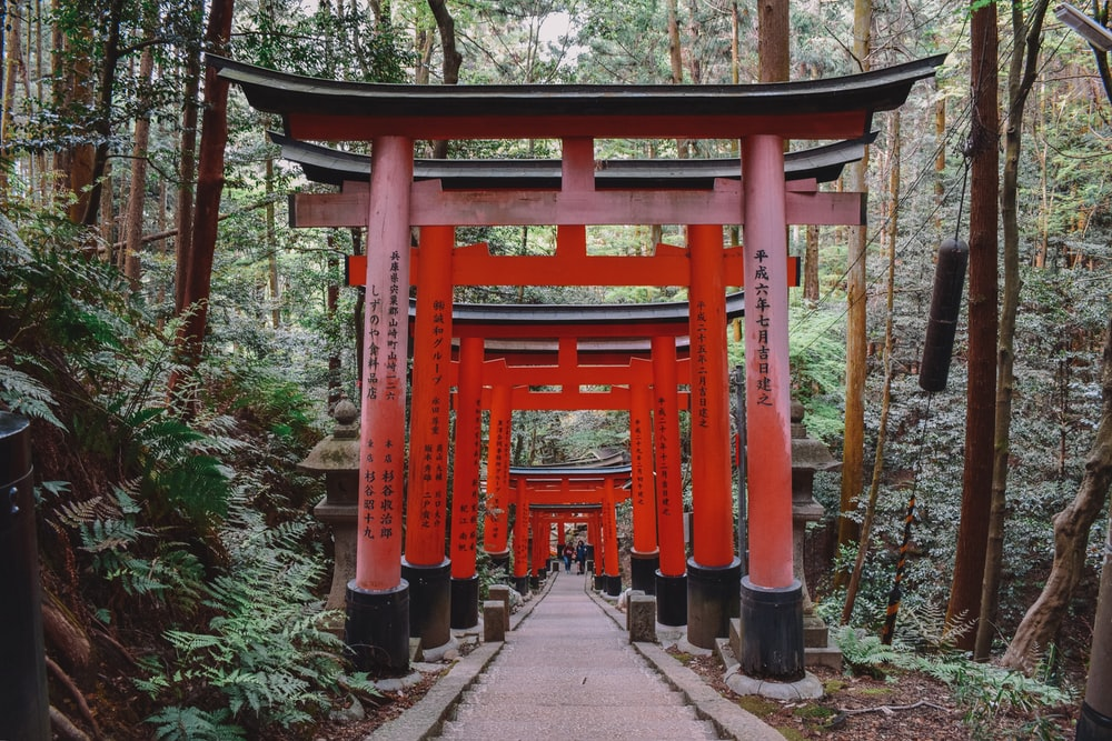 pathway of red torii gates near trees