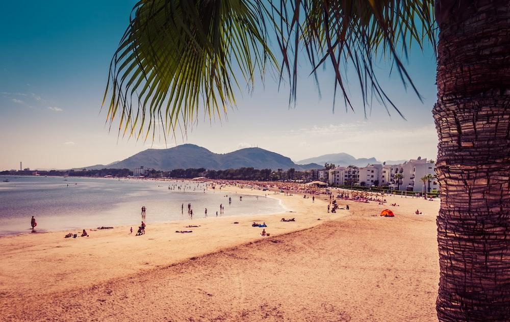 people on white sand beach