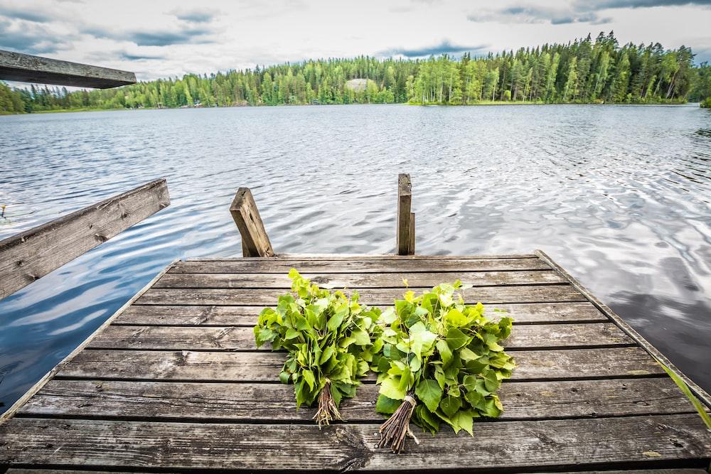 brown wooden dock at a lake