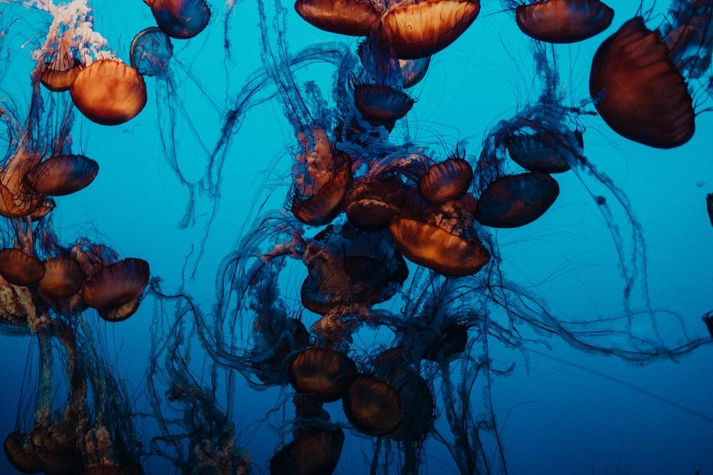 brown and black jellyfish wallpaper