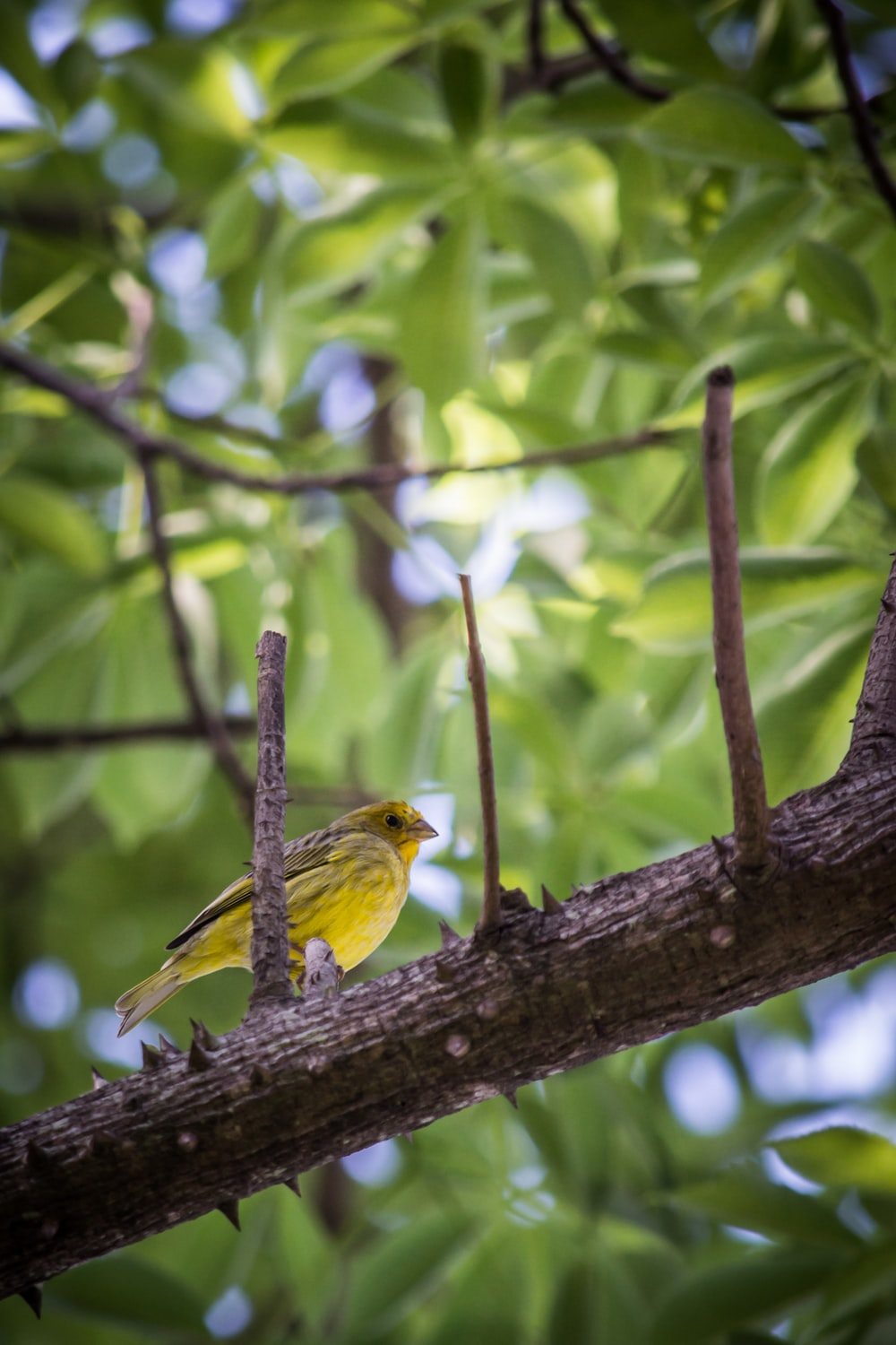 yellow bird perching on tree