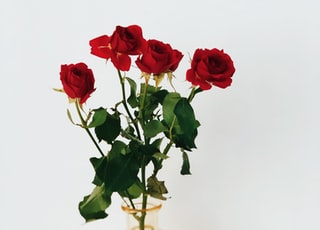 four red roses on clear glass vase