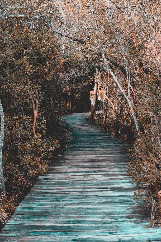 wooden bridge between trees