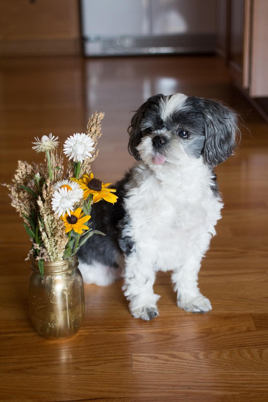 dog near flower