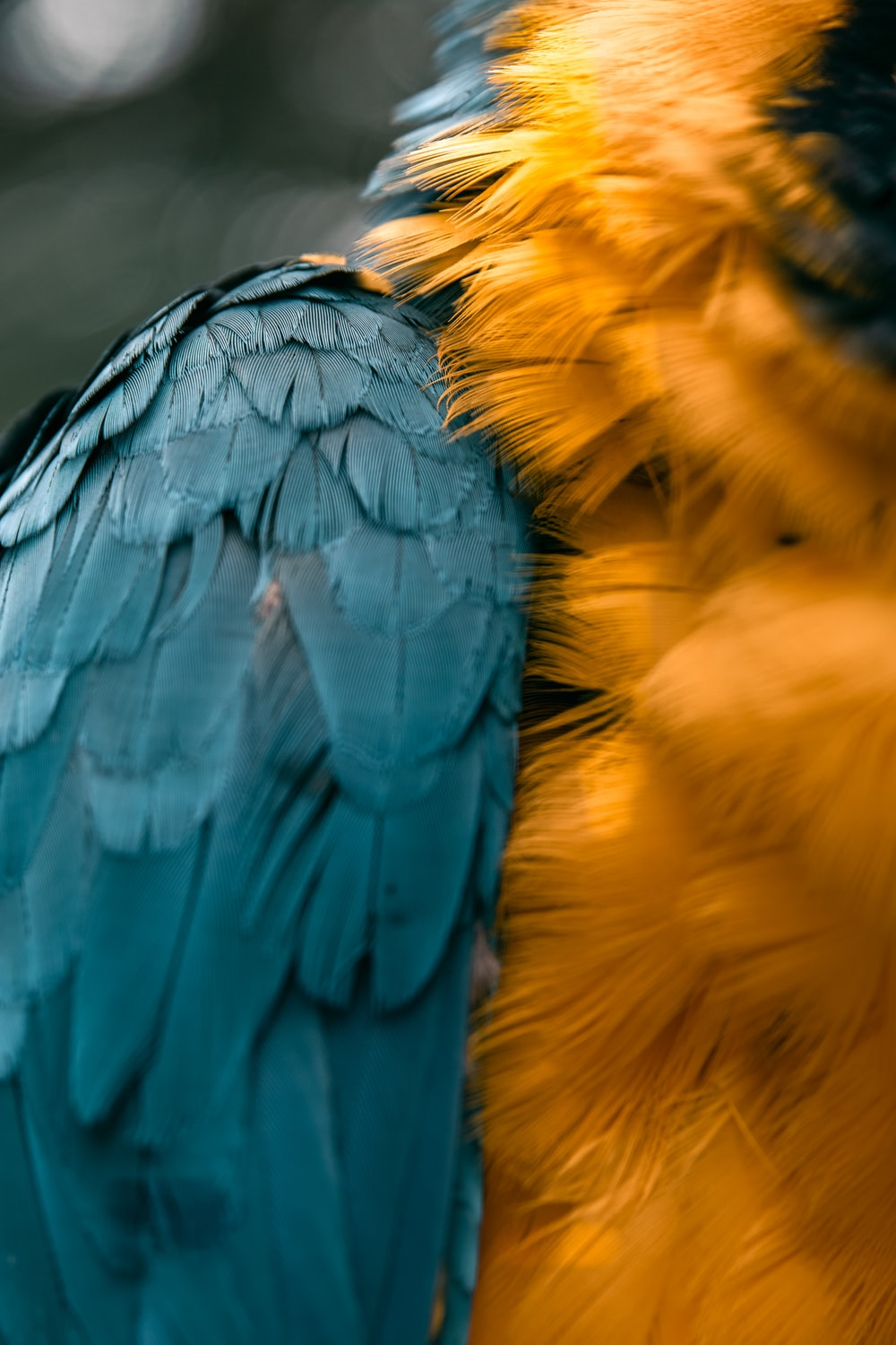yellow and blue eagle