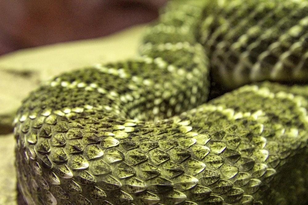 green snake scale macro photography