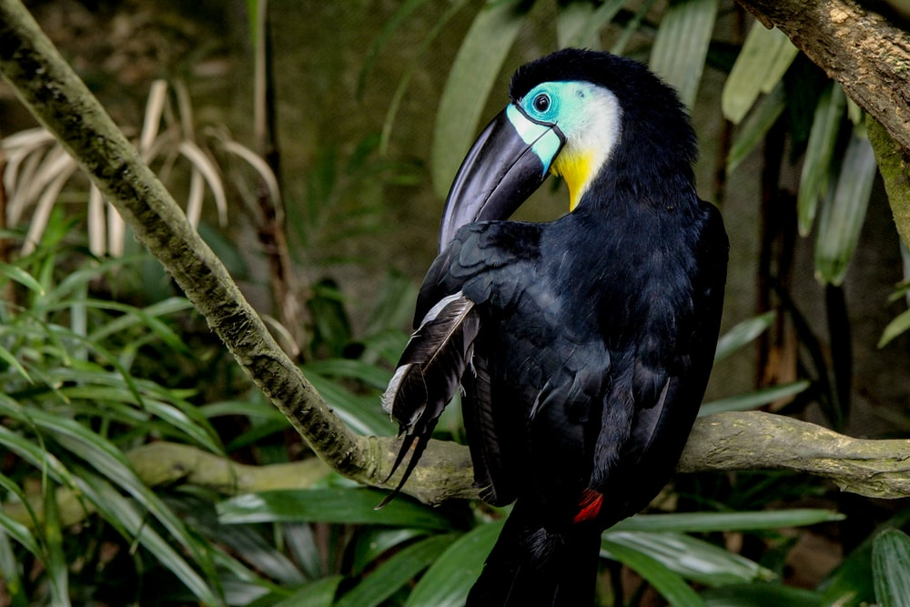 black toucan bird besides green plants