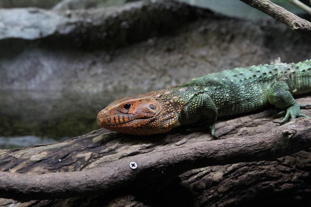 reptile on log