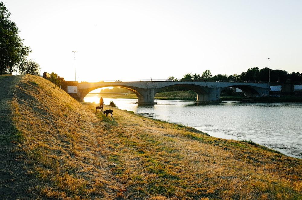 person besides 2 dogs across gray concrete bridge