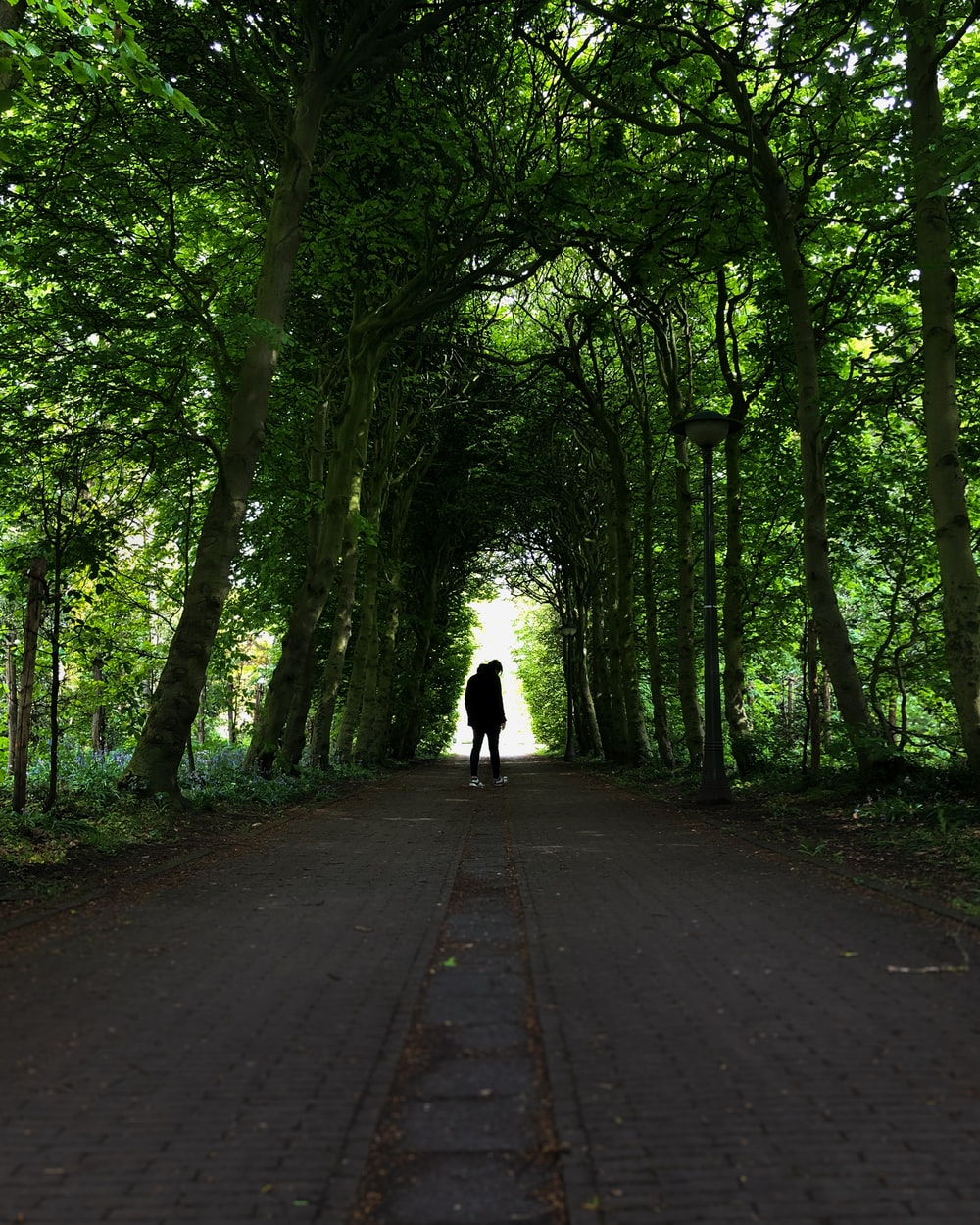 person standing under tree tunnel