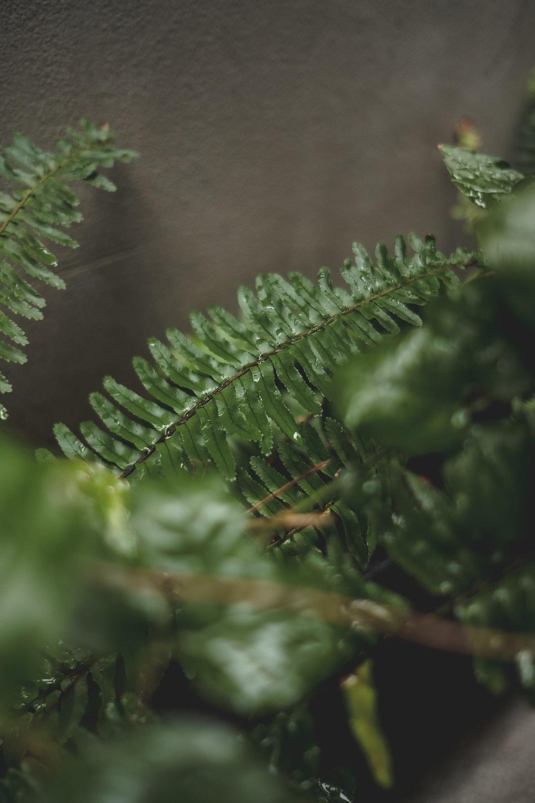 green plants rain