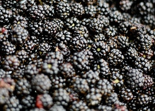 closeup photo of blueberries
