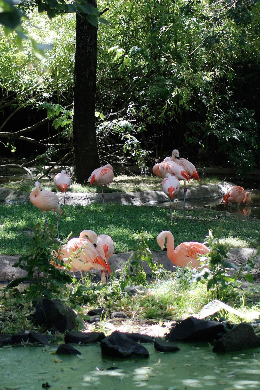 pink flamingos under trees