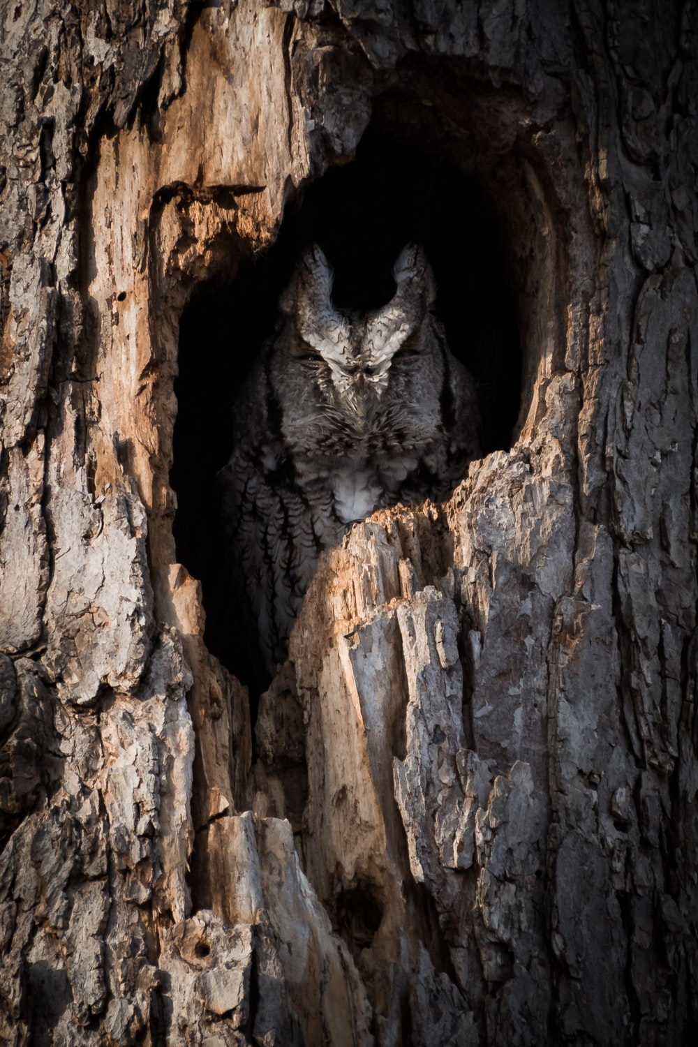 owl inside tree hole