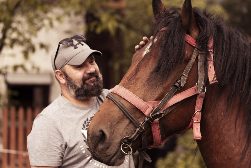 Tips To Help You Ride A Horse Safely