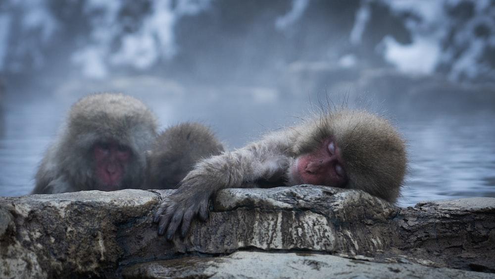 two black monkeys close-up photography