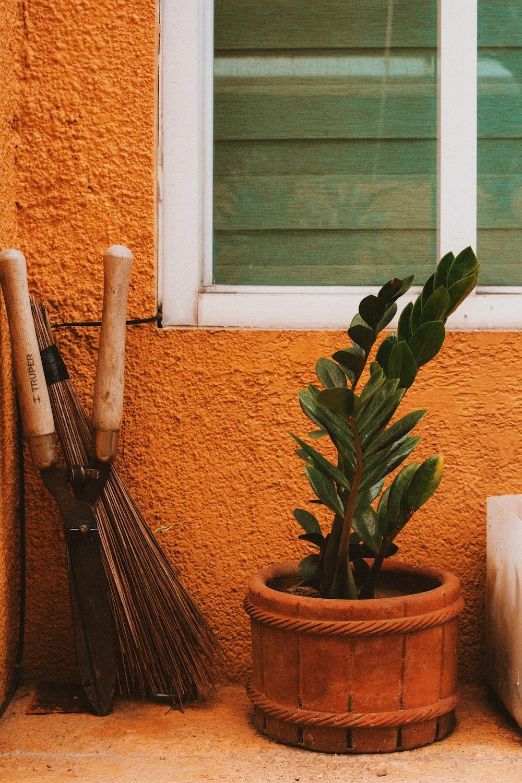 green-leafed plant in pot near window